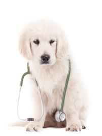 hunde_stetoskop